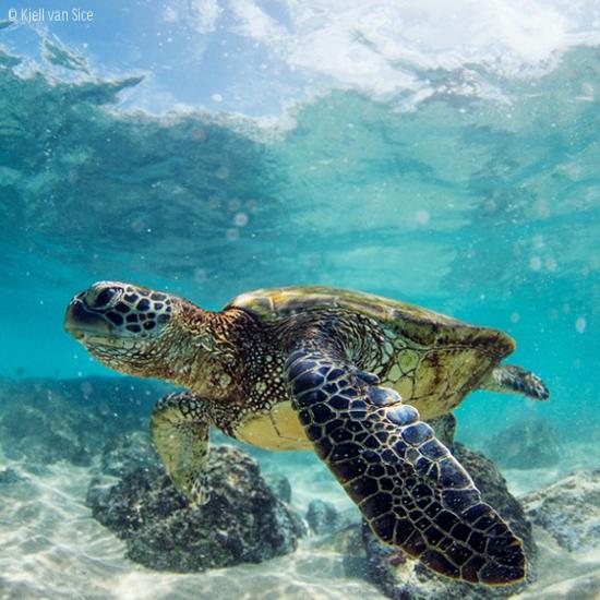 (Foto: Kjell van Sice/ divulgação Oceana)