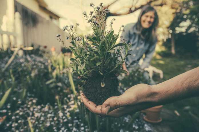jardim, garden, horta