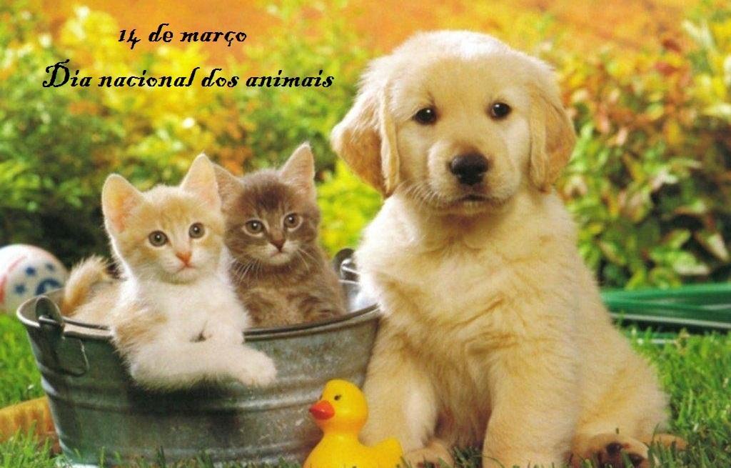 Resultado de imagem para 14 de março dia nacional dos animais