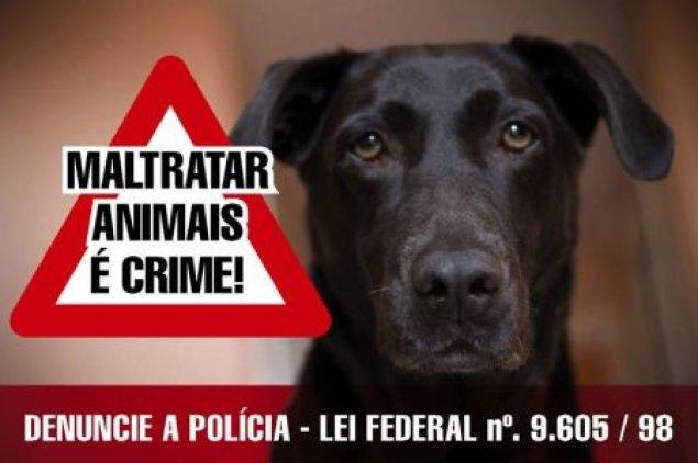 Resultado de imagem para maltratar animais é crime