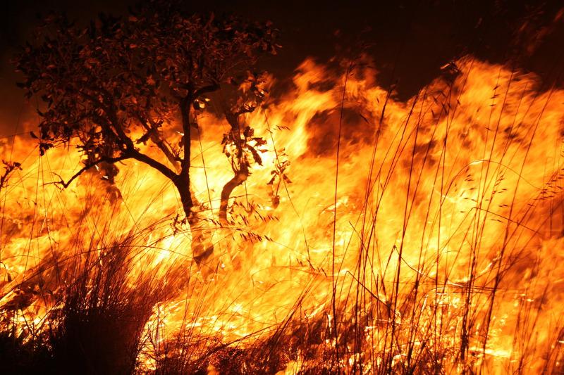 Resultado de imagem para queimadas