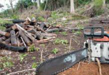 desmatamento na Amazõnia