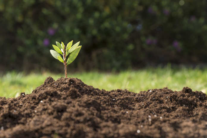 solo, planta, agroecologia