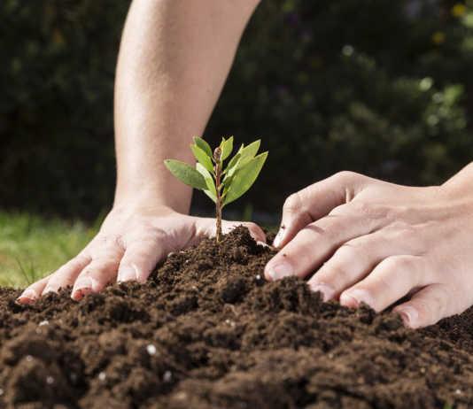 solo-plantar