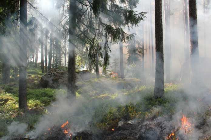 floresta pegando fogo, queimadas
