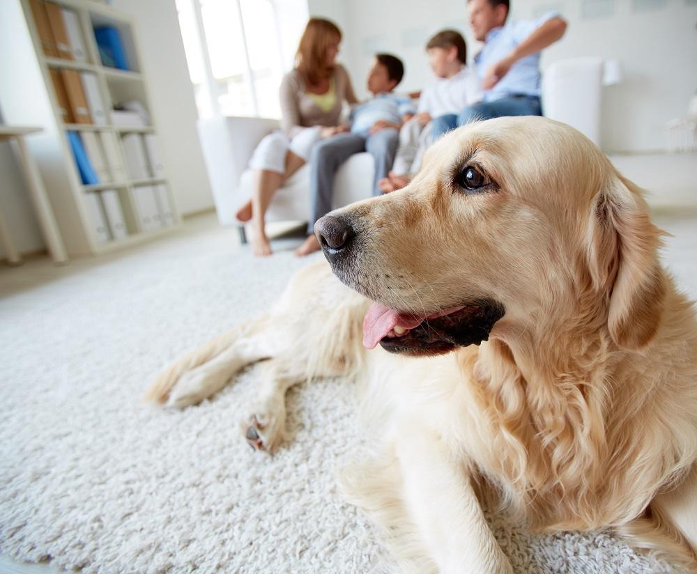 Resultado de imagem para pets em condomínios