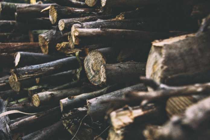 toras de madeira, árvores desmatadas, desmatamento