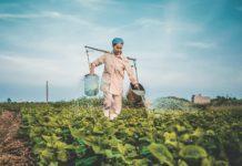 agricultora cuidando da sua produção plantação