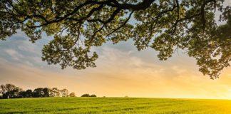 fazenda, orgânicos, agricultura
