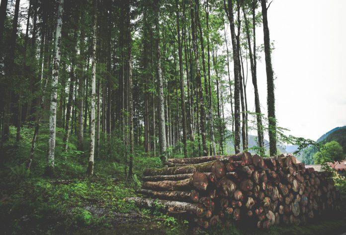 desmatamento Amazõnia