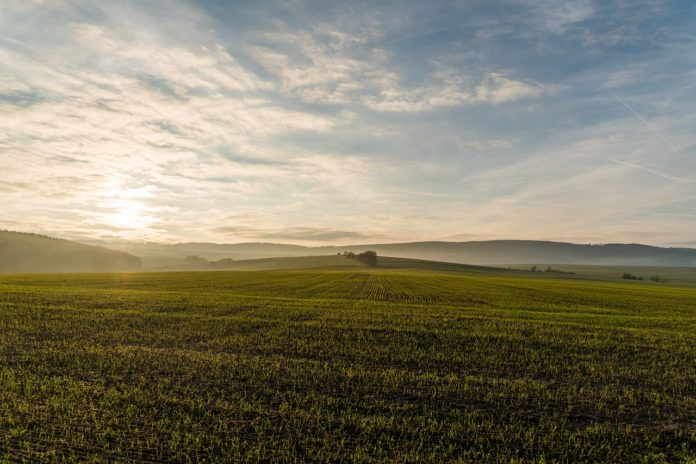 campo, agricultura,