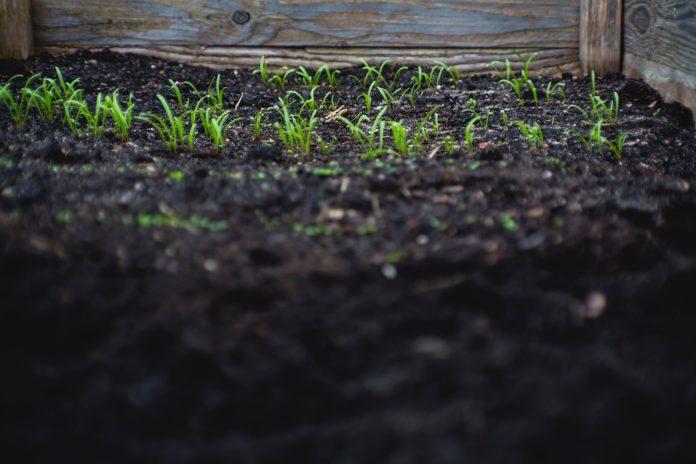 plantação, adubo, solo, terra, horta, cultivo, agricultura