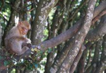 macaco no tronco de uma árvore
