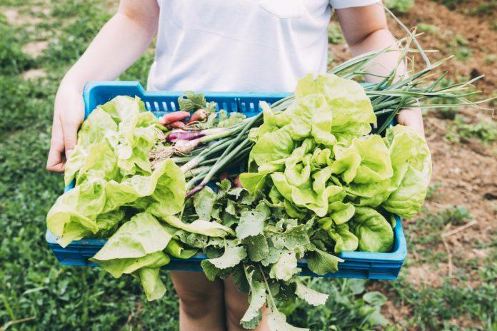 agricultor segura cesta de produtos orgânicos
