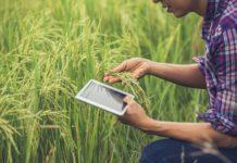 Produtor no campo de arroz com um tablet
